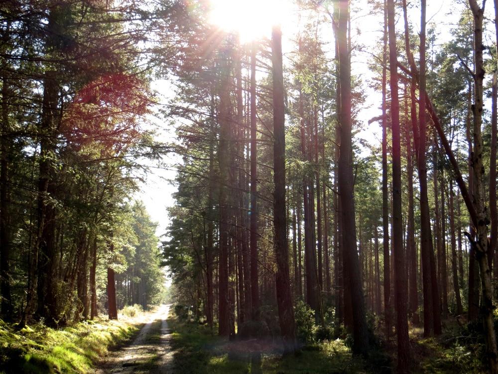 bosklooster stilte retraite in de natuur