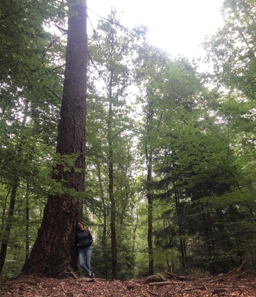 bosklooster zinzicht weken