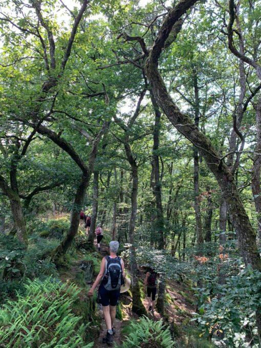 natuur retraite in de Ardennen